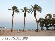 Купить «Пальмы на фоне Мертвого моря. Израиль», фото № 5325209, снято 11 ноября 2013 г. (c) Александр Овчинников / Фотобанк Лори
