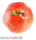 Купить «Красный  гранат на белом фоне», фото № 5326129, снято 5 октября 2013 г. (c) Литвяк Игорь / Фотобанк Лори