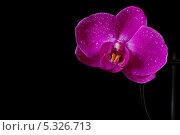 Цветок орхидеи на черном фоне. Стоковое фото, фотограф Наталия Тихонова / Фотобанк Лори