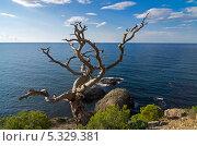 Купить «Мертвая сосна на скале», фото № 5329381, снято 22 сентября 2013 г. (c) Сергей Рыбин / Фотобанк Лори