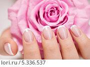 Красивые женские руки с французским маникюром и нежная роза. Стоковое фото, фотограф Валуа Виталий / Фотобанк Лори