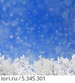 Купить «Заснеженные деревья и падающий снег», иллюстрация № 5345301 (c) Михаил Коханчиков / Фотобанк Лори