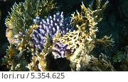 Купить «Морские кораллы, подводная съемка», фото № 5354625, снято 21 сентября 2010 г. (c) Алексей Сварцов / Фотобанк Лори