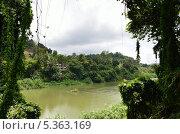 Окно из джунглей (2012 год). Стоковое фото, фотограф Павел Беломыцев / Фотобанк Лори