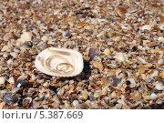 Обручальные кольца в ракушке на пляже. Стоковое фото, фотограф Александр Орлов / Фотобанк Лори