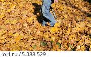 Купить «Подросток гуляет по опавшей листве», эксклюзивный видеоролик № 5388529, снято 14 декабря 2013 г. (c) Алёшина Оксана / Фотобанк Лори