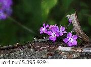 Цветы. Стоковое фото, фотограф Анастасия Кунденкова / Фотобанк Лори