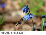 Пчела у цветка. Стоковое фото, фотограф Владимир Вольвач / Фотобанк Лори