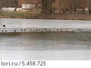 Купить «Пруд в парке «Кузьминки»», фото № 5458725, снято 31 декабря 2013 г. (c) Андрей Чернов / Фотобанк Лори