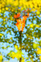 Нефтяной факел сквозь крону дерева, фото № 5471453, снято 22 сентября 2012 г. (c) Икан Леонид / Фотобанк Лори