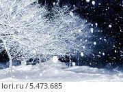 Заснеженные деревья ночью в снегопад. Стоковое фото, фотограф Петренко Иван / Фотобанк Лори