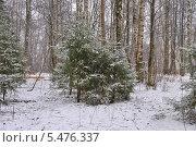 Купить «Заснеженный зимний лес в пасмурную погоду», эксклюзивное фото № 5476337, снято 12 января 2014 г. (c) lana1501 / Фотобанк Лори