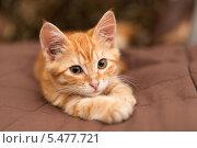 Купить «Рыжий котенок лежит на кровати», фото № 5477721, снято 1 октября 2013 г. (c) Okssi / Фотобанк Лори