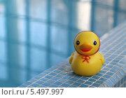 Желтая резиновая уточка у бассейна. Стоковое фото, фотограф Виктория Чеканова / Фотобанк Лори