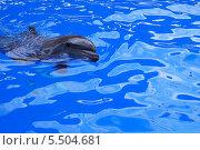Купить «Дельфин», фото № 5504681, снято 2 июня 2012 г. (c) Ирина Здаронок / Фотобанк Лори