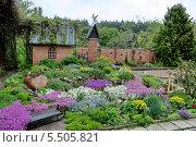 Цветущий газон в саду. Стоковое фото, фотограф Андрей Заяц / Фотобанк Лори