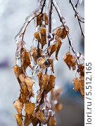 Купить «Покрытые льдом ветви деревьев», фото № 5512165, снято 21 января 2014 г. (c) Типляшина Евгения / Фотобанк Лори