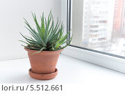 Купить «Комнатные цветы на подоконнике в горшке. Алоэ остистое. Aloe aristata.», фото № 5512661, снято 23 января 2014 г. (c) Олег Голиков / Фотобанк Лори