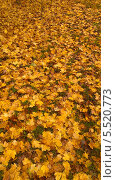 Опавшие осенние желтые листья на зеленой траве. Стоковое фото, фотограф Сергей Шихов / Фотобанк Лори
