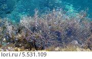 Морская вода и водоросли, фон. Стоковое фото, фотограф Insomnia / Фотобанк Лори