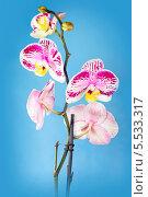 Купить «Красивый цветок орхидеи», фото № 5533317, снято 3 апреля 2013 г. (c) ElenArt / Фотобанк Лори
