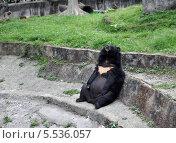 Мишка присел отдохнуть. Очень жарко на улице. Стоковое фото, фотограф Елена / Фотобанк Лори