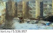 Купить «Мороз рисует узоры на окне на фоне улицы», видеоролик № 5536957, снято 29 января 2014 г. (c) Алексей Луковников / Фотобанк Лори