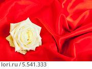 Купить «Распустившийся бутон белой розы лежит на красной ткани», фото № 5541333, снято 13 июня 2012 г. (c) Сергей Дубров / Фотобанк Лори