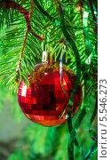 Купить «Красный елочный шар на еловых ветках», фото № 5546273, снято 3 января 2014 г. (c) Любовь Назарова / Фотобанк Лори