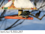 Синица зимой в кормушке с куском хлеба в клюве. Стоковое фото, фотограф Склярова Ирина / Фотобанк Лори