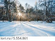 Купить «Зимний лесной пейзаж», эксклюзивное фото № 5554861, снято 25 января 2014 г. (c) Игорь Низов / Фотобанк Лори