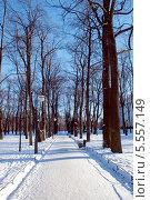 Аллея в зимнем парке. Стоковое фото, фотограф Марина Валентиновна Фор / Фотобанк Лори