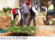 Купить «Мужчины в традиционной крестьянской одежде готовят печеный лук кальсот на открытом огне. Вальс, Испания», фото № 5570481, снято 26 января 2014 г. (c) Яков Филимонов / Фотобанк Лори