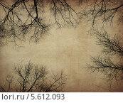 Купить «Старая потемневшая бумага с силуэтами веток деревьев», иллюстрация № 5612093 (c) Анна Павлова / Фотобанк Лори