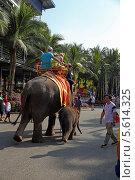 Купить «Катание туристов на слонах. Тропический парк Нонг Нуч (Nong Nooch Tropical Garden), Королевство Таиланд», фото № 5614325, снято 27 декабря 2013 г. (c) Григорий Писоцкий / Фотобанк Лори