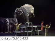 """Купить «Слон выполняет акробатический трюк на представлении цирка братьев Запашных """"Страшная сила"""" на сцене Лужников», эксклюзивное фото № 5615433, снято 23 декабря 2013 г. (c) Николай Винокуров / Фотобанк Лори"""