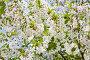 Белые цветы вишни, фото № 5628333, снято 2 мая 2008 г. (c) Владимир Сурков / Фотобанк Лори