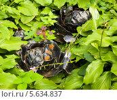 Купить «Великий Новгород, памятник капусте», фото № 5634837, снято 18 июля 2013 г. (c) ИВА Афонская / Фотобанк Лори