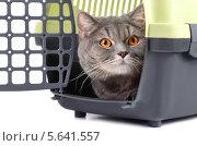 Купить «Серая кошка в пластмассовой переноске на белом фоне», фото № 5641557, снято 17 декабря 2013 г. (c) Наталия Евмененко / Фотобанк Лори