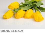 Желтые тюльпаны на столе. Стоковое фото, фотограф Tanya Lomakivska / Фотобанк Лори