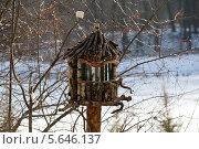 Кормушка для птиц. Стоковое фото, фотограф Галина Б. / Фотобанк Лори
