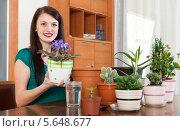 Купить «Девушка пересаживает фиалку в большой цветочный горшок дома», фото № 5648677, снято 7 июля 2020 г. (c) Яков Филимонов / Фотобанк Лори