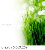 Купить «Зеленая молодая трава на белом фоне, место для текста», фото № 5669269, снято 11 февраля 2013 г. (c) Наталия Кленова / Фотобанк Лори