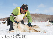 Купить «Каюр со своей ездовой собакой», фото № 5672881, снято 2 марта 2014 г. (c) А. А. Пирагис / Фотобанк Лори