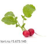 Купить «Редис с зелеными листьями. Изолированно. Крупный план. Белый фон», фото № 5673145, снято 17 апреля 2012 г. (c) Natalja Stotika / Фотобанк Лори