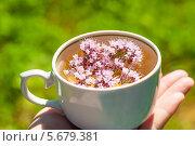 Купить «Травяной чай с душицей», фото № 5679381, снято 10 июля 2012 г. (c) Володина Ольга / Фотобанк Лори