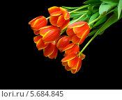 Купить «Красные тюльпаны, изолированно на чёрном фоне», фото № 5684845, снято 8 марта 2014 г. (c) Ласточкин Евгений / Фотобанк Лори