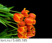 Купить «Букет тюльпанов на черном фоне», фото № 5685185, снято 8 марта 2014 г. (c) Ласточкин Евгений / Фотобанк Лори