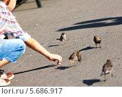 Мальчик кормит птиц. Стоковое фото, фотограф Артем Шутов / Фотобанк Лори