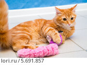 Купить «Кот лежит на полу и играет с игрушкой», фото № 5691857, снято 22 декабря 2013 г. (c) Андрей Воробьев / Фотобанк Лори